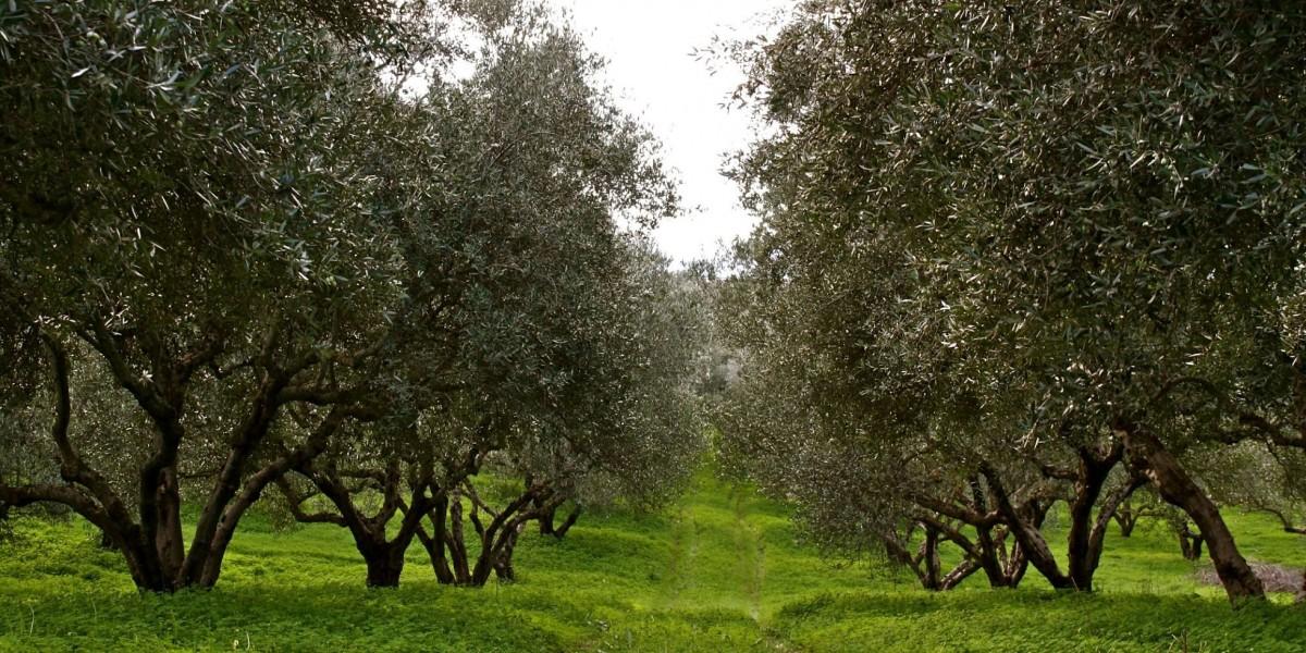 Mazi Farm in Greece